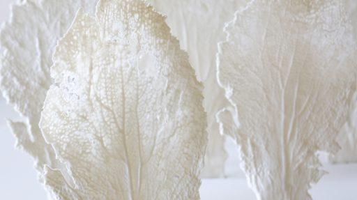Gorgonia Corinne Vorwerk Smaal Artwork 5b