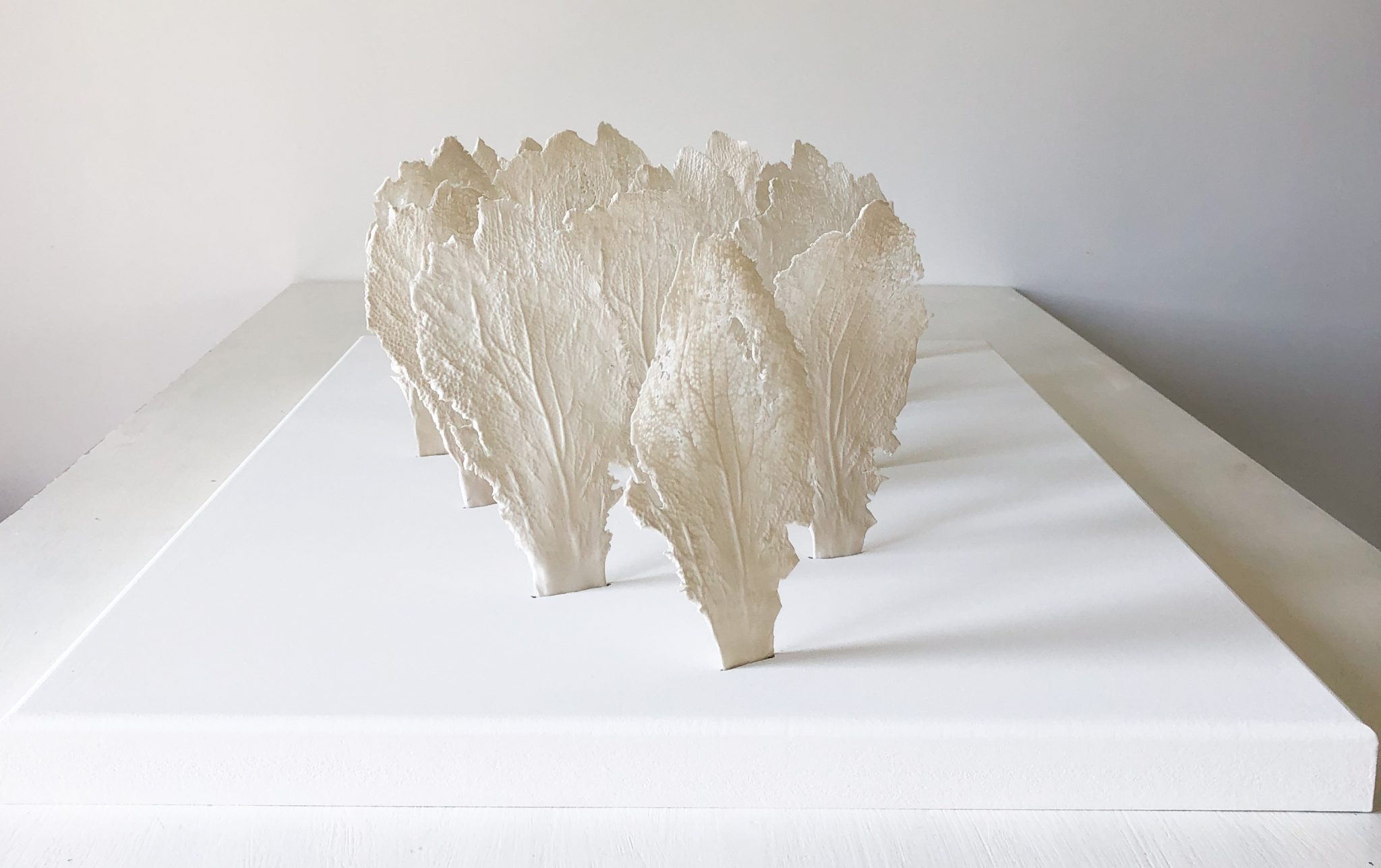Gorgonia Corinne Vorwerk Smaal Artwork 7